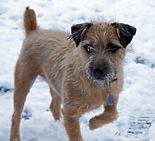 Monty owning the snow by Toni pepper
