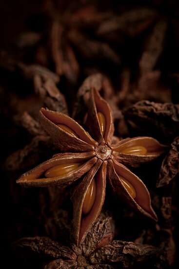 Star Anise by Jerry Deutsch