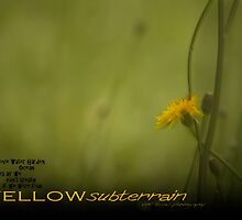 Yellow Subterrain © Vicki Ferrari Photography by Vicki Ferrari