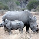 Mother And Baby Rhino by Michael  Moss