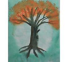 Big Old Tree  in Full Bloom (pink blossoms), watercolor Photographic Print