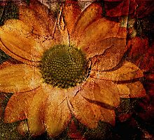 Floral Decay # 1 by Julesrules