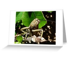 Inquisitevely Shy Greeting Card