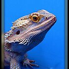 Bearded Dragon by AngieBanta