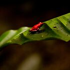 { red poison dart frog } by Brooke Reynolds