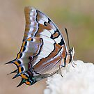 Swallowtail Butterfly by clearviewstock