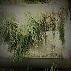 Faded Dreams (best viewed LARGE) by Jen Waltmon