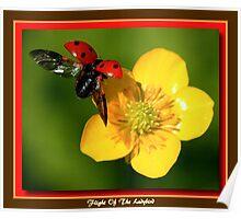 Flight Of The Ladybird (2) Poster