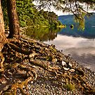 Tree roots at Derwentwater by Shaun Whiteman