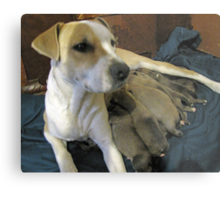 jerzy and her pups Metal Print