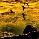 GoldieRocks & the 4 gulls by Alan Mattison