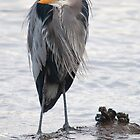 Great Blue Heron (as Vincent Price) by titus