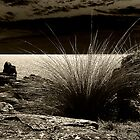 Seaside Grass by Josie Jackson