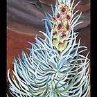 """Silversword (Haleakala National Park)."" by amyglasscockart"