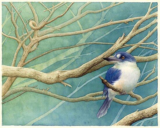 Forest kingfisher (Todiramphus macleayii) by Laura Grogan