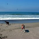 Dog Days At The Beach by Loree McComb