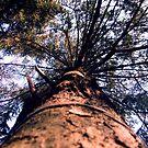 Big tree love by bd0m