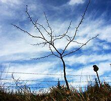 Thorn Bush by Karen  Rubeiz