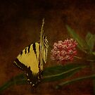 The Swallowtail! by swaby