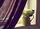 hydrangeas in my window by Angel Warda