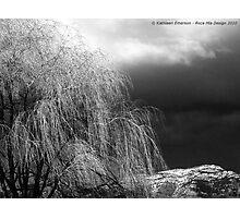Winter's Dirge Photographic Print