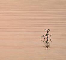 The Lonely Weed - Sea of Galilee by Noam Gordon