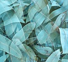 Eucalypus tree leaves 1 by Howard Gwynne