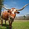 Longhorn Lunch at the Roadside Cafe by Bonnie T.  Barry