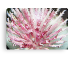 Pink Flames reaching for you Canvas Print