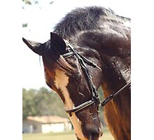 Elodie's Horse Photographic Print