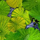 Waterlilies in HDR by njordphoto