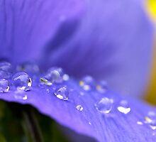 Purple by Louis Tsai