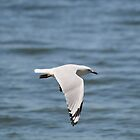 Flying Seagull by Amy Dee
