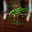 Reflections of a leaf insect by James Millward