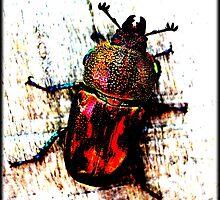 Christmas Beetle by Vanessa k
