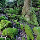 Moss by Bluesoul Photography