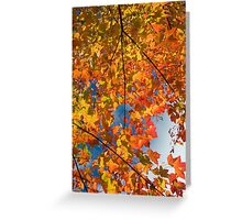 Quebec fall, color - 2010 Greeting Card