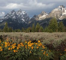 The Grand Teton & Mules Ears by AMRuttleResale