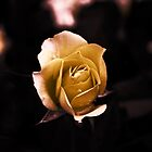 Rose Yellow- by Evita
