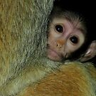 A Mother's Comfort (Patas Monkey Baby) by Robert Miesner