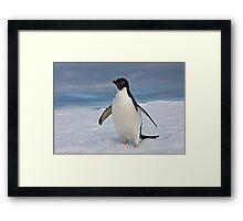 Adelie Penguin seeks Fame Framed Print