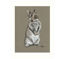 Sitting Bunny Art Print
