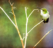 { mystical hummingbird } by Brooke Reynolds