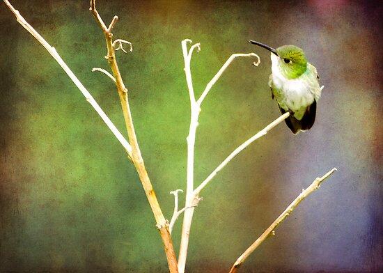 { mystical hummingbird } by Brooke Reynolds