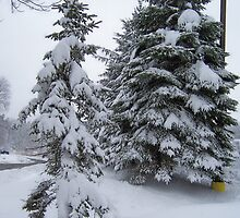Two snowy pines by Roger-Cyndy