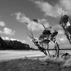 seaside at the Catlins in New Zealand by pic4you