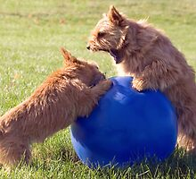 A Doggy Disagreement by susan stone
