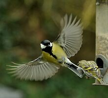 Great tit by Russell Couch