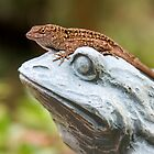 08-147 ~ Lizard On Frog by djyoriginals
