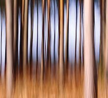 Deep in the Forest by Anne Staub